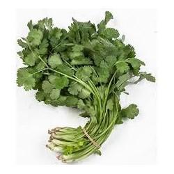 Koriander 30g čerstvé bylinky
